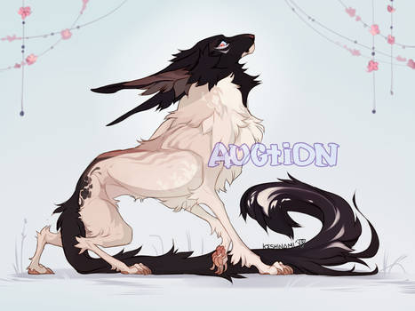 #40 Fluffy black-headed dog [ADOPT AUCTION] CLOSED