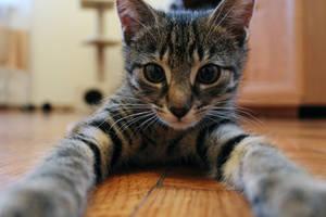 CATselfie by Mimetka