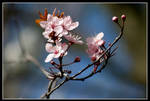 Pink Blossom II by george-kay
