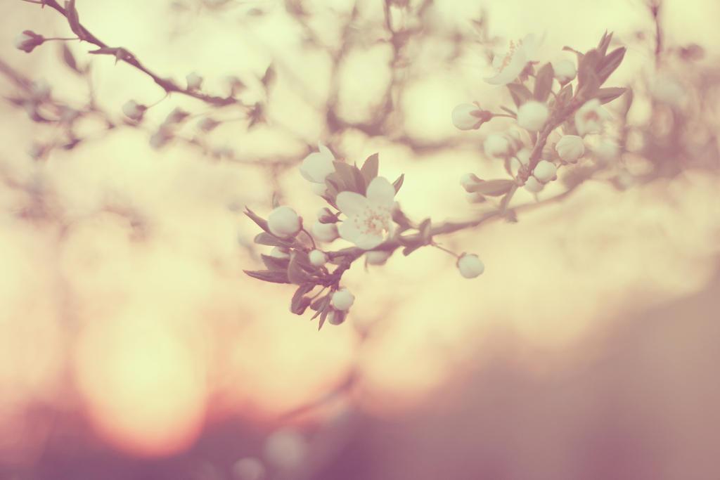Waiting for Spring 2 by magdalenamalek
