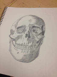 First Attempt At Drawing A Skull by fabulosity