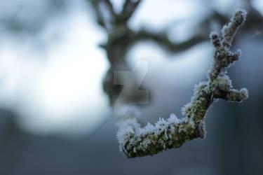 What winter brings