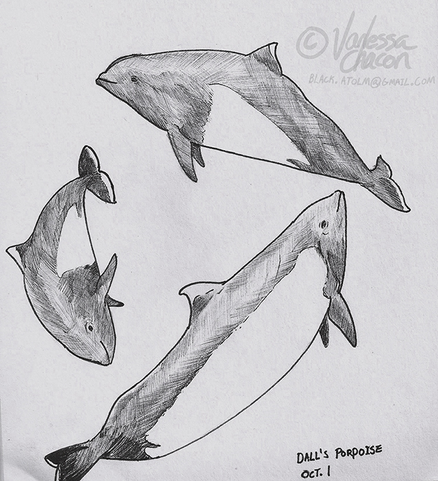 October 1 - Dall's Porpoise by Atolm