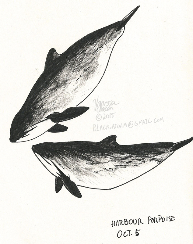 October 5 -  Harbor Porpoise by Atolm