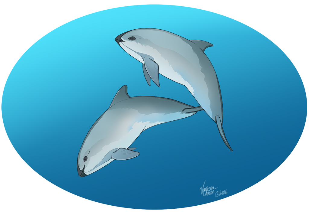 Cute Vaquitas by Atolm