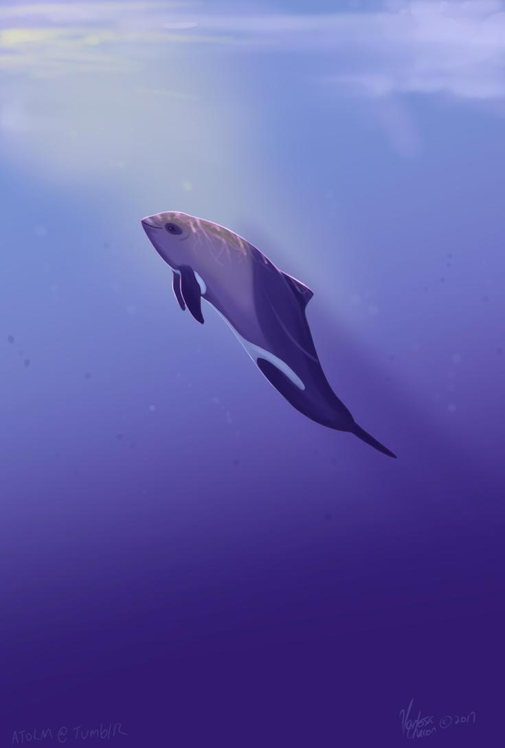 Heaviside dolphin warm up by Atolm