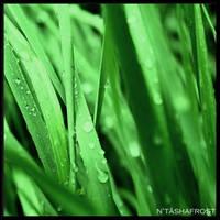grass by theoriginalcaffiend