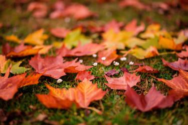 November daisies by Hashidoi