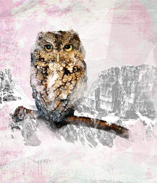 Collage with owl by tashamille