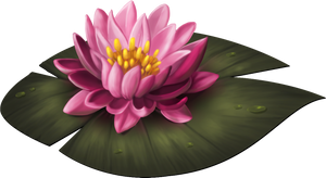 Water lily by tashamille