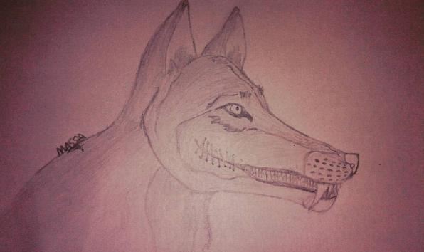Wolf by YaUniverse