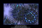 glassy urchins of Europa