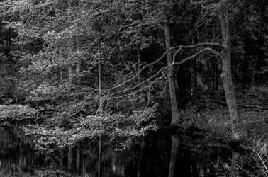 Dark Water II