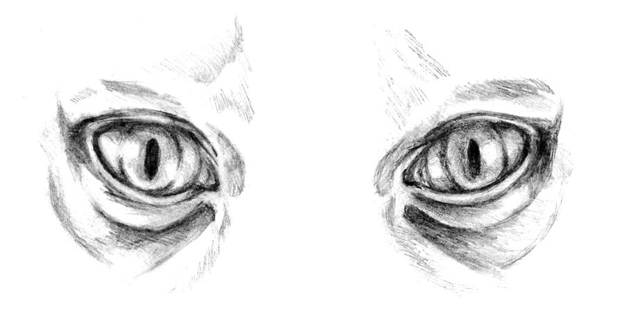 http://fc07.deviantart.net/fs71/f/2011/300/2/d/gediman__s_eyes_by_g_smilodon-d4e3iue.jpg