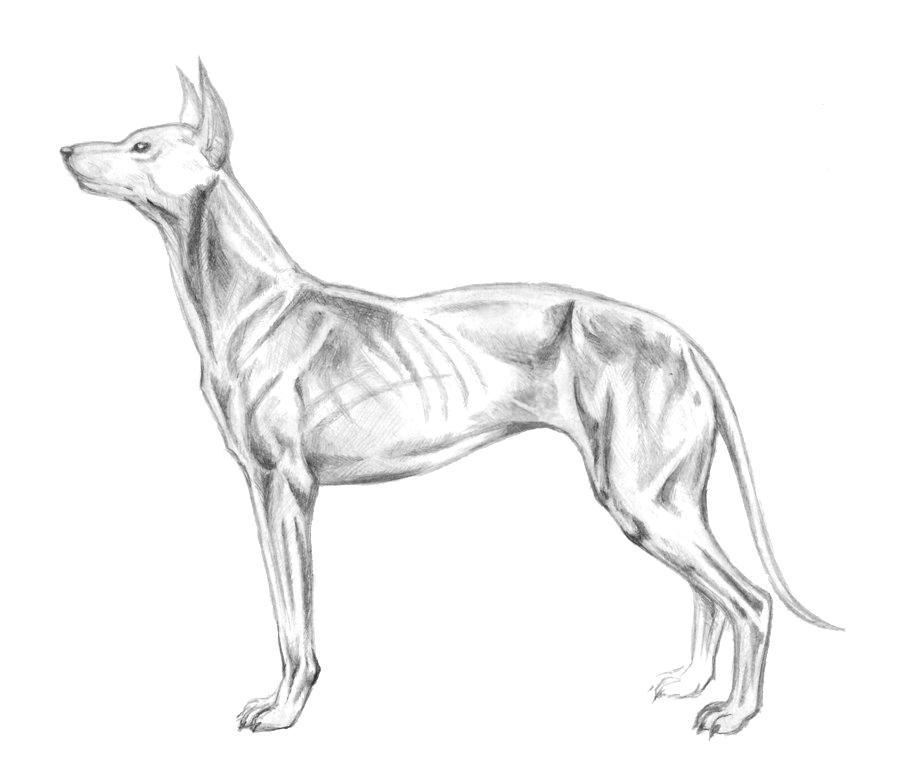Dog by G-Smilodon