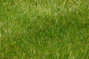 Grass 1 by vrhmq7
