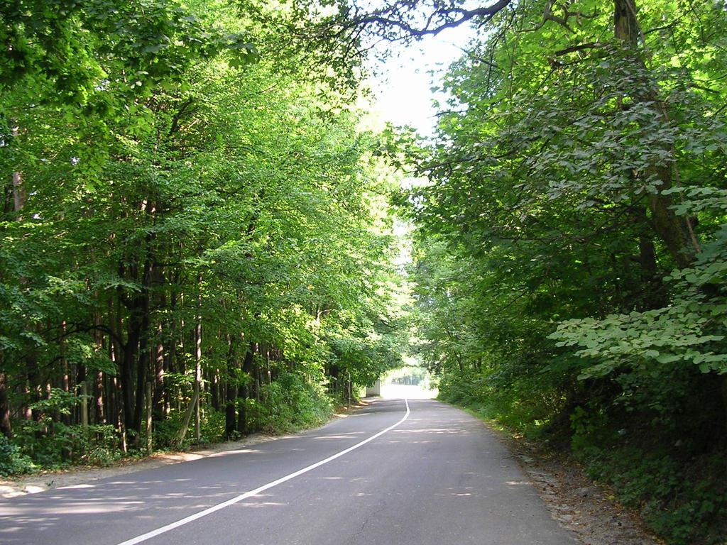Road Between The Trees By Rickimaru On Deviantart