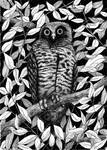 Powerful Owl (sort of)