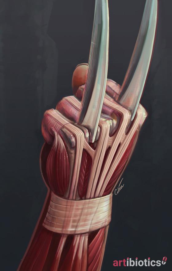 X23 claw anatomy by cilein on DeviantArt