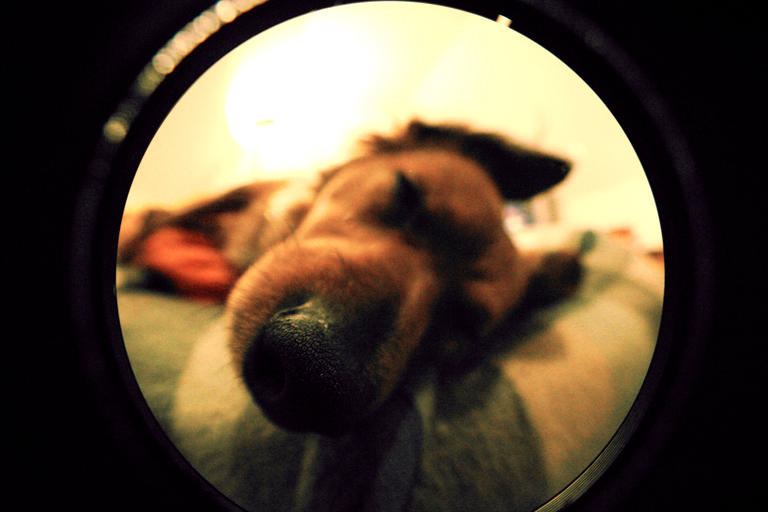 1st Fisheye by QuinTor-Vol-2