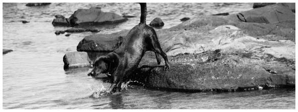 wet dog by rachelleejj