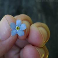 Little flower I by rosaarvensis