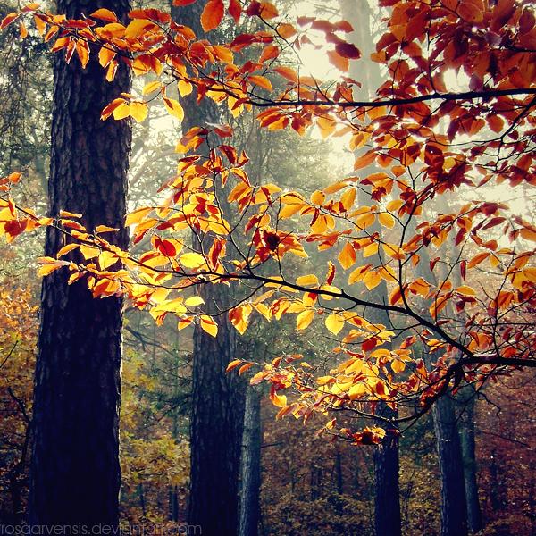 Bright leaves by rosaarvensis
