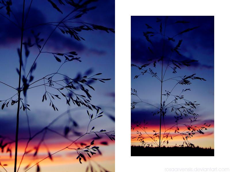 Silent summer by rosaarvensis