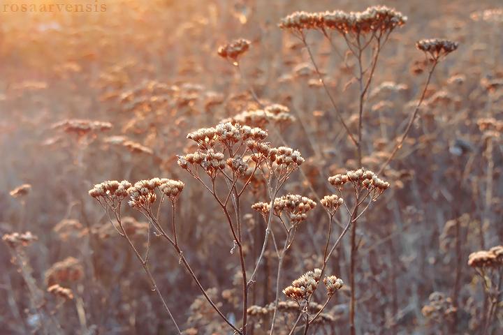 Brown meadow by rosaarvensis