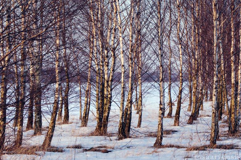 Last snow by rosaarvensis