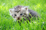 In the grass I