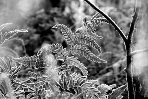 Cold breath II by rosaarvensis