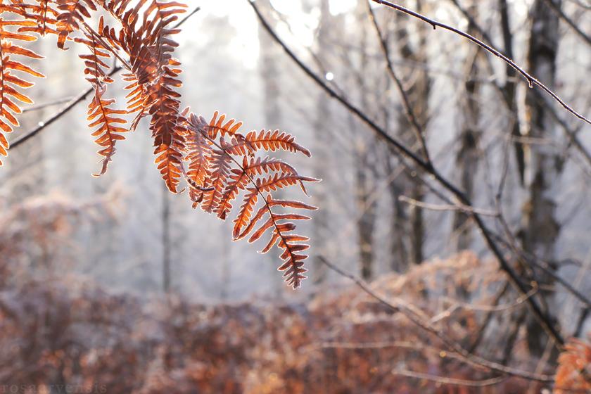 Cold breath III by rosaarvensis