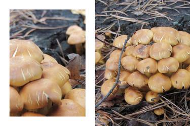 Cracked mushrooms