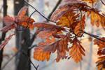 Autumn with oak