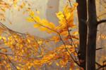Autumn with hornbeam II