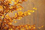 Autumn with hornbeam III