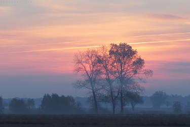 Dawn with poplars by rosaarvensis