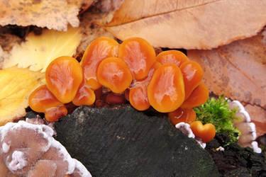 Glossy mushrooms