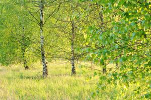 Bright greens by rosaarvensis