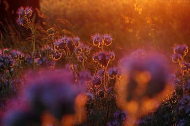 Bees have gone to sleep II by rosaarvensis