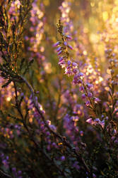 W cichym lesie II by rosaarvensis