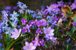 Garden turned purple and blue