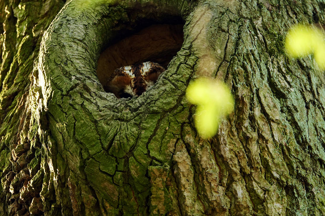 In a hole in the tree by rosaarvensis