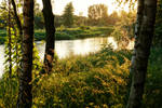 Evening by the river V by rosaarvensis