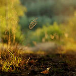Grasses on the forest road I