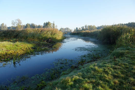Good morning, Jeziorsko I