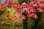 Autumn garden I