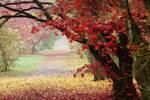 Autumn garden III