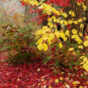 Autumn garden VII